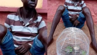 Photo of Man kills Brother for bringing Parrots into their Home
