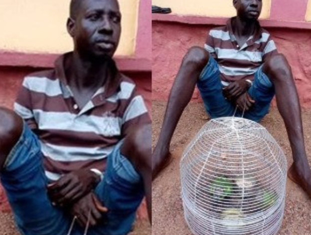 Man kills Brother for bringing Parrots into their Home 1