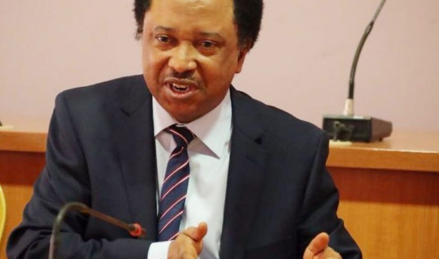 Stop talking about hunger in Nigeria so they don't come for you - Shehu Sani tells Sultan of Sokoto 1