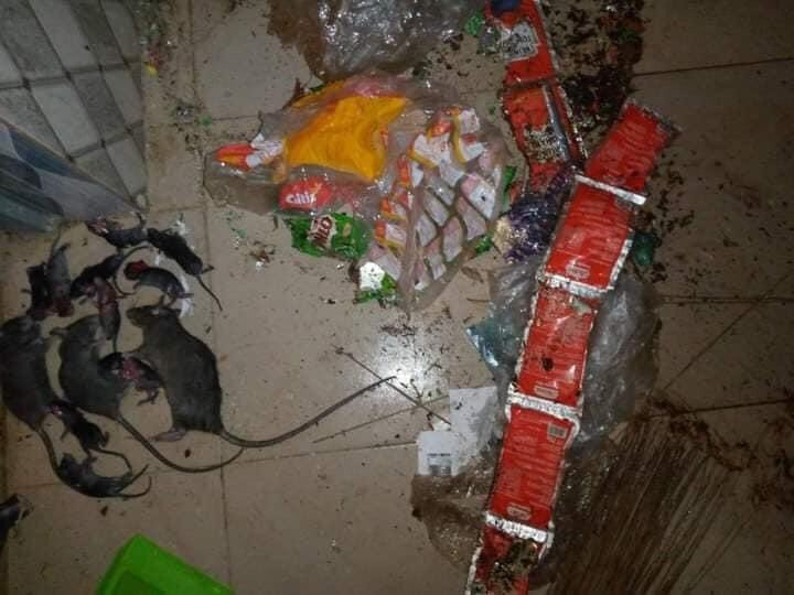 ABSU student returns to school to discover the damage rats have done to his belongings (Photos) 11
