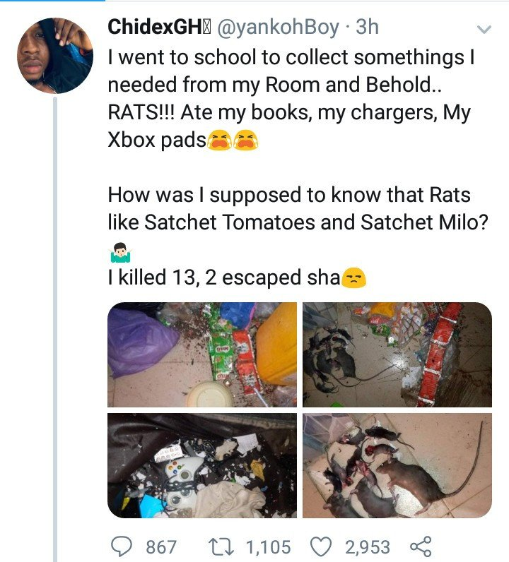 ABSU student returns to school to discover the damage rats have done to his belongings (Photos) 10