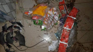 Photo of ABSU student returns to school to discover the damage rats have done to his belongings (Photos)
