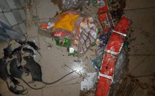 ABSU student returns to school to discover the damage rats have done to his belongings (Photos) 9