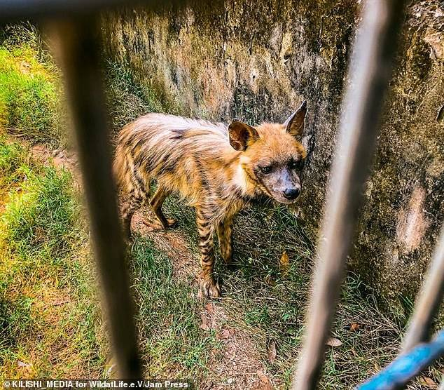 Wildlife charity begins rescue mission after visitor secretly took pictures of a starving lion and dozens of underfed animals at a Zoo in Nigeria (Photos) 12